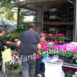 mercato fiore